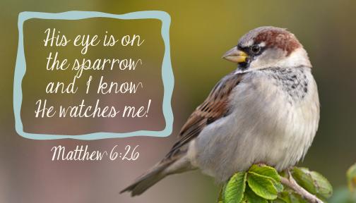 Sparrow print 7x4