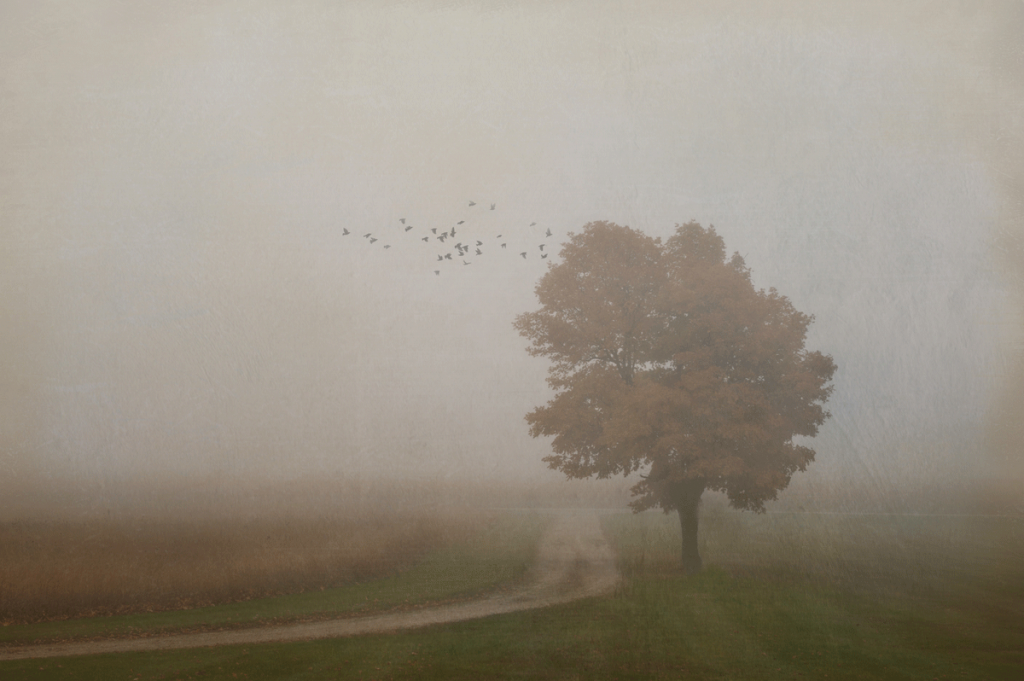 Fall-Tree-in-Fog_lightstock_102353_small_susan